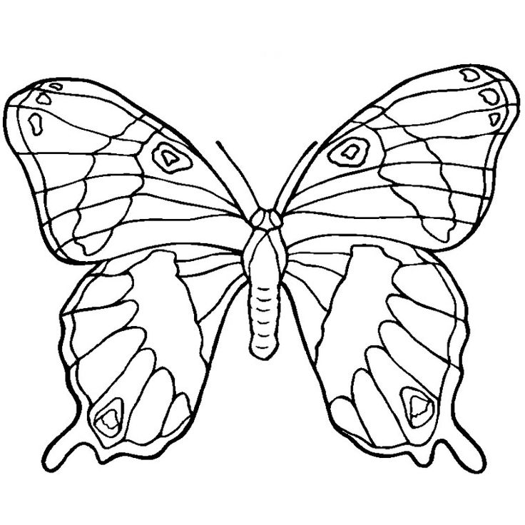 coloriage papillon a imprimer gratuit coloriage pinterest papillons - Rainforest Insects Coloring Pages