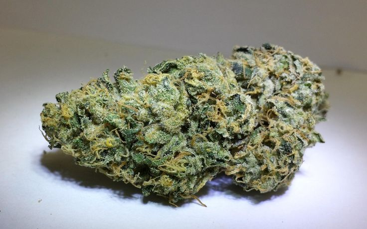 Lost Coast Skunk Auto Strain Review  This version of Lost Coast Skunk is an autoflowering, Sativa/Indica/Rudralis cannabis strain that is the result of crossing a Lost Coast Skunk with a Ruderalis. Lost Coast Skunk is a strain of real high quality to smoke and is ideal for beginners, as being highly easy to grow means even novices can obtain a quality...  #cannabis #StrainGrade #marijuana #pot #weed #strains #dank