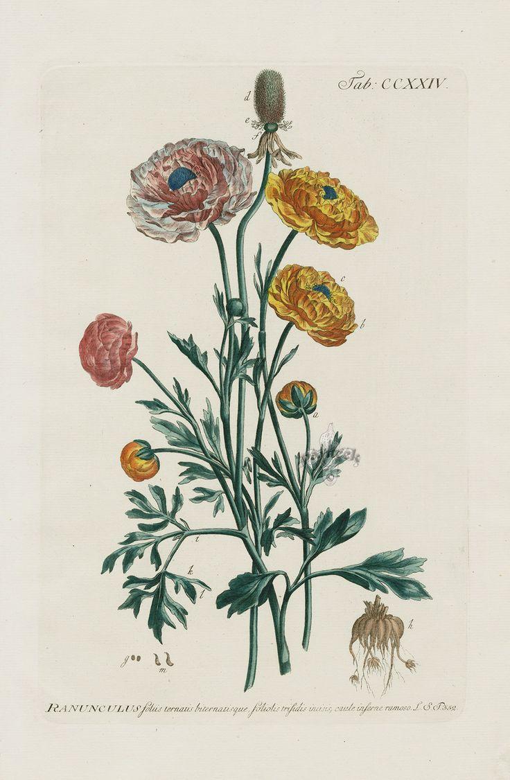 Старинные гербарии картинки, картинки красивые надписями