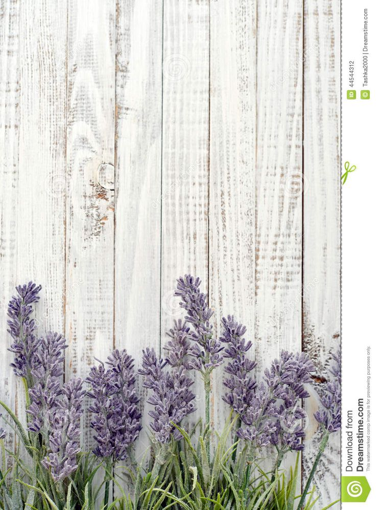 Bouquet Lavender Stock Photo - Image: 44544312