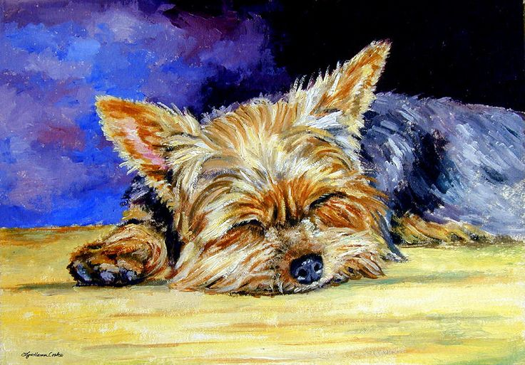 Sun Light Snoozer - Yorkshire Terrier Painting by Lyn Cook - Sun Light Snoozer - Yorkshire Terrier Fine Art Prints and Posters for Sale