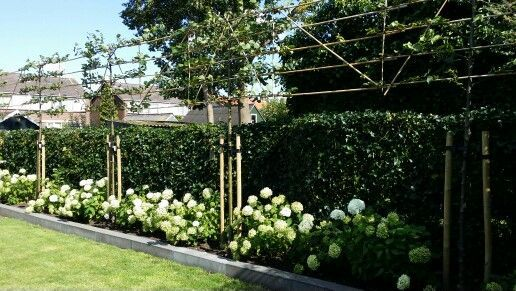 Espalier trees create a higher fence line thats also pretty apple