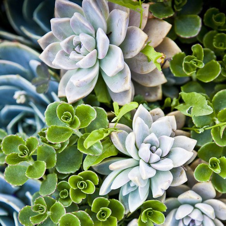 green + soft blues+ plants