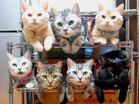 NEW-Acme Cat Storage, guaranteed to keep you and your cats organized.