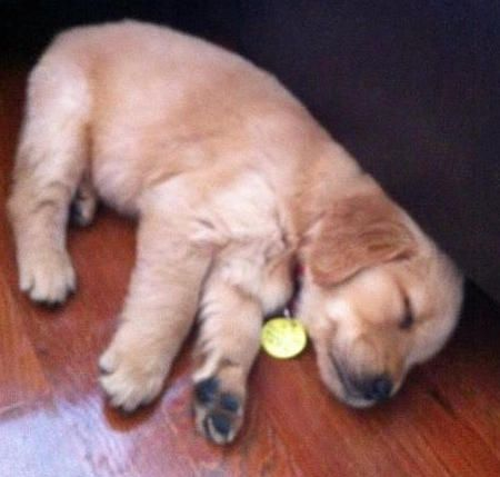 Wish I could just lie there and be cute.: Puppy Dogs, Dogs Lie, Adorable Animals, Beautiful Animals, Dailypuppy Com Favorites, Animals Pet, Baby Pets, Golden Retriever Puppies