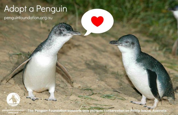 """Adopt"" a penguin to help fund the rescue and rehabilitation operations. 