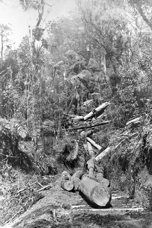 Logs on a corduroy road in the Glen Esk Valley, near Piha. 1915. A corduroy road is paved with split logs laid crosswise side by side flat face up and round side embedded in a crudely prepared soil base. Photo JTD-04D-03321