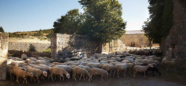Paisaje cultural agropastoral mediterráneo de Causses y Cévennes Francia.