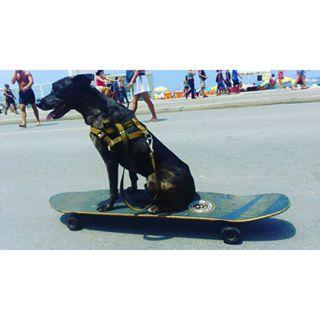 Filho de peixe, peixinho é... Feriadinho Bom pra cachorro!!!  #EleAmou #InstanDog  #Long #Skate #Profissa  #SectorNineLong