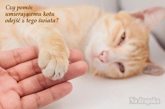 Eutanazja śmiertelnie chorego kota