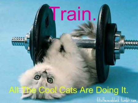 exercise: Cats, Kitten, Animals, Fitness, Weight Loss, Weights, Funny, Kitty, Workout