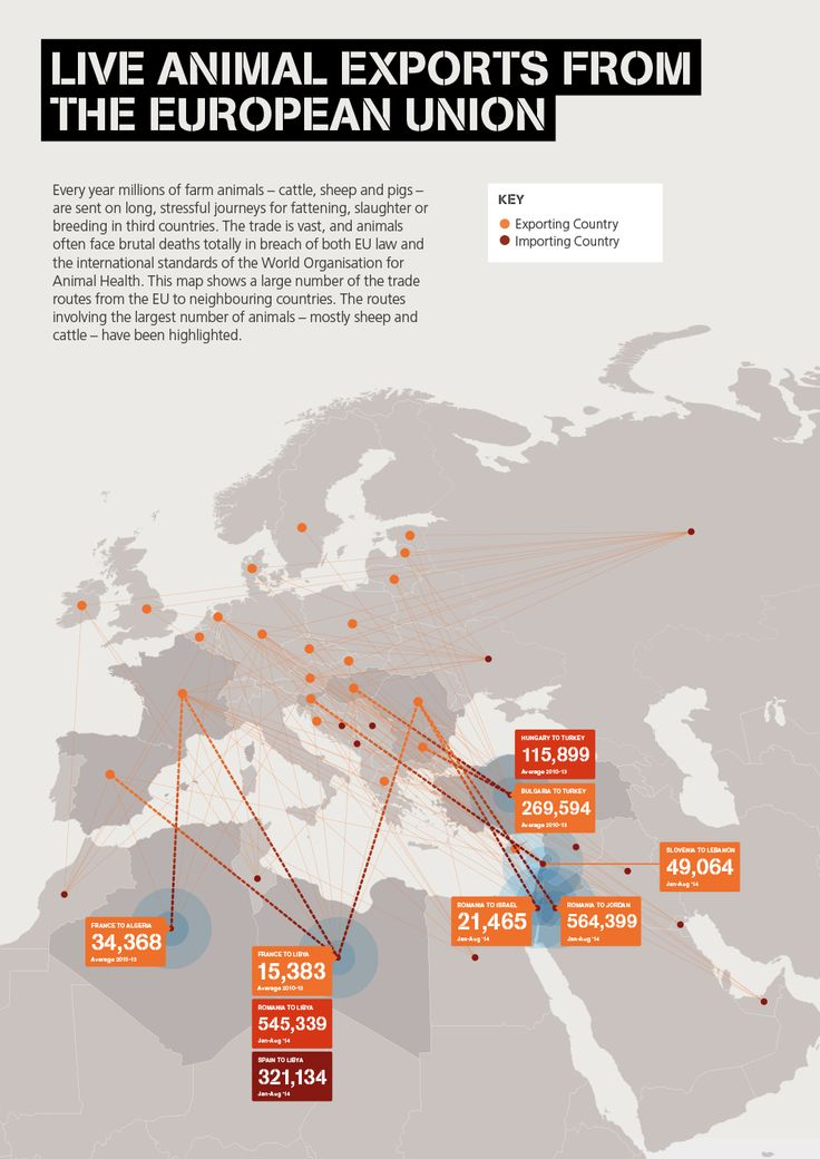 Compassion holds an exhibition at the European Parliament and shows MEPs why #liveexports must be stopped.  This map shows a large number of the trade routes from the EU to neighbouring countries, where animals will often face brutal deaths totally in breach of both EU law and the international standards of the World Organisation for Animal Health (OIE).