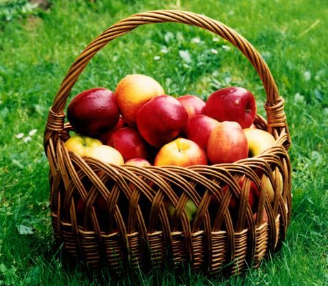 14 Autumn Superfoods