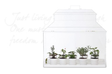 conservatory for all my herbs