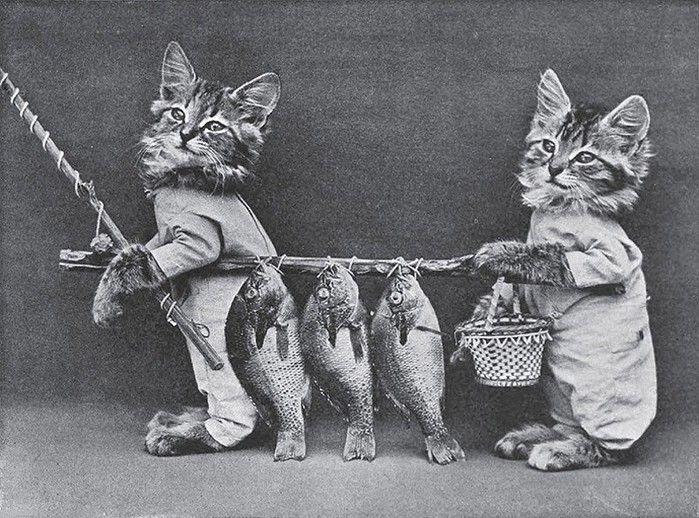 tante immagini di gatti