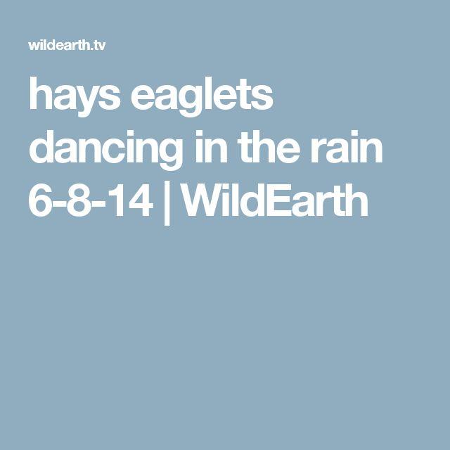 hays eaglets dancing in the rain 6-8-14 | WildEarth