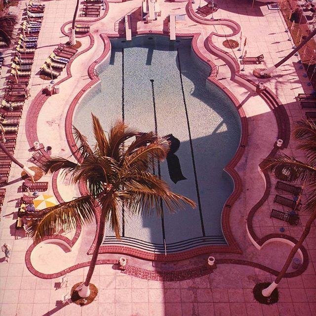 If anyone wants us, we'll be here... #winonaustralia #winonaloves #inspiration #pinkpool #palmtree