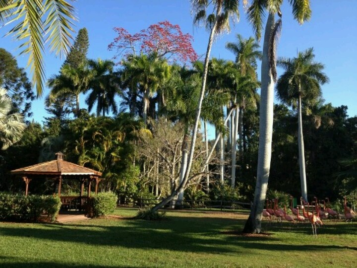 171 Best Images About Florida Gardens On Pinterest