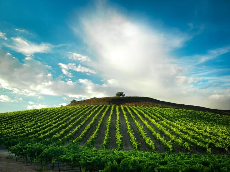 Santa Barbara VineyardsFavorite Places, Vacations Rental, Santa Barbara, Totally Wine, Andrewros Realestate, Barbara County, Rosecoastrealti Andrewros, Barbara Vineyard, Barbara Wine