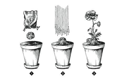 how it works! Gorilla Gardening Seedballs