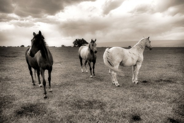 Spirit Wind Horse Rescue