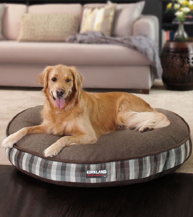 between dog beds kirkland l extraordinary bed labradoodle manor costco and serta lake