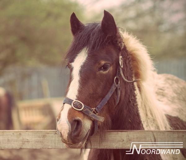Fotobehang Noordwand Farm life 3750071 Brown horse