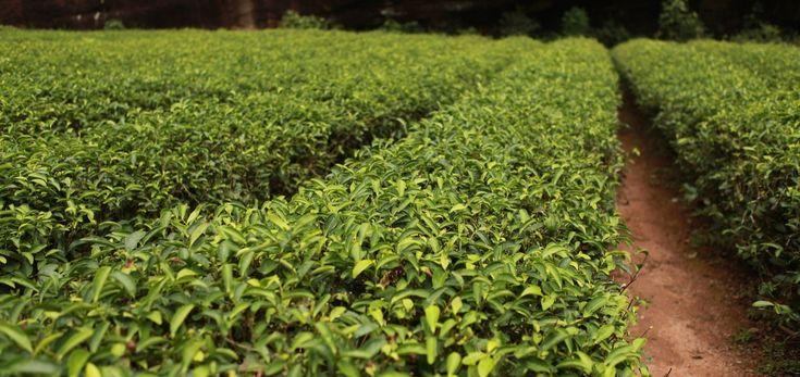 Teebaumöl – 11 Beschwerden, bei denen dir dieses Hausmittel garantiert weiterhilft