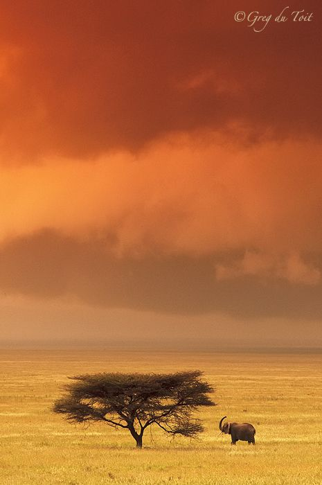"Photo ""Serengeti Elephant"" by greg du toit"