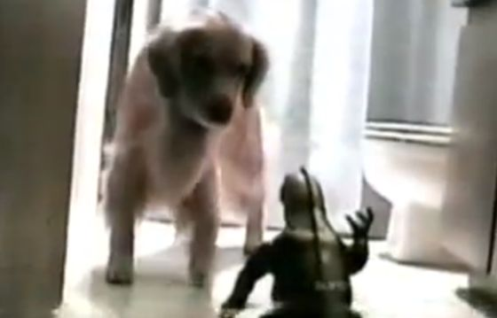 Golden Retriever vs Godzilla (VIDEO)