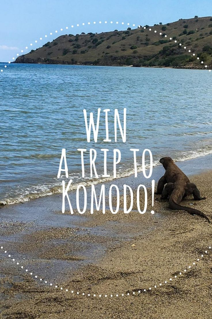 Want to learn how to train a dragon & WIN a trip to Komodo with Indonesia Travel? Then click through and get all the details.