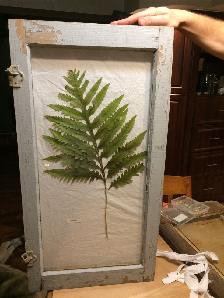 DIY old window frame with a dried fern. Christmas present