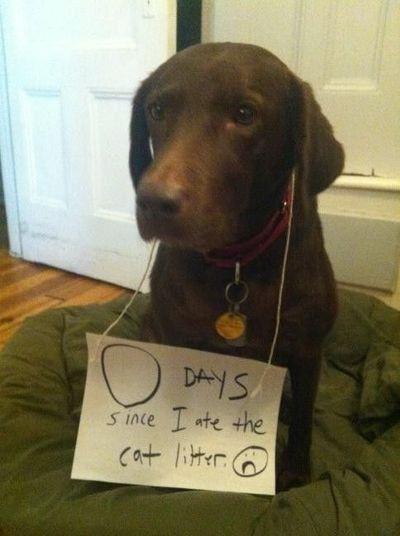 dog shaming...funny