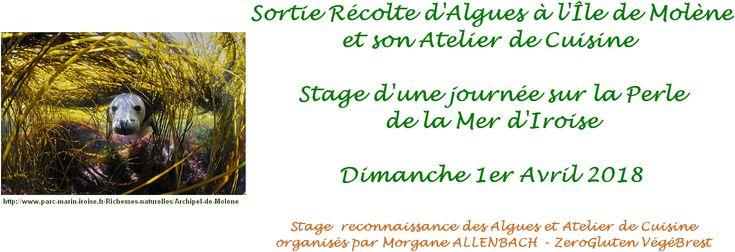 Bonjour à Vous :) Le Dimanche 1er avril sera un jour de grande marée, à cette occasion je vous invite à m'accompagner à la pêche à pied végétale...   Stage de Reconnaissance et Récolte d'Algues de la Mer d'Iroise & Atelier de Cuisine sur L'Île de Molène   Dimanche 1er Avril 2018 - de 9h00 à 17h00 - Île de Molène   ��� PLACES LIMITÉES - inscription impérative :)     Stage de Reconnaissance, Récolte d'Algues & Atelier de Cuisine organisés par Morgane Allenbach de ZeroGluten