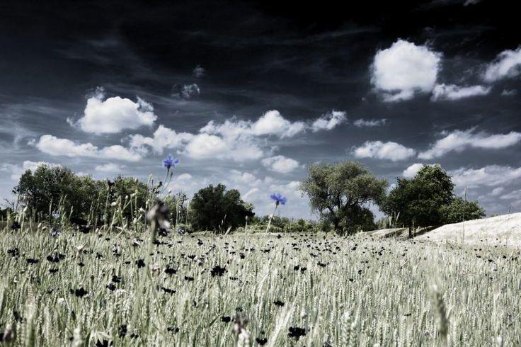 Wojciech Kowalski, fotografia artystyczna