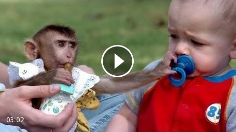 Funny annoying monkeys – Cute and funny monkey compilation