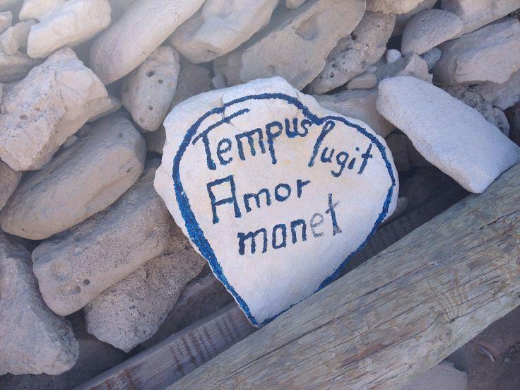 Tempus lugit Amor manet