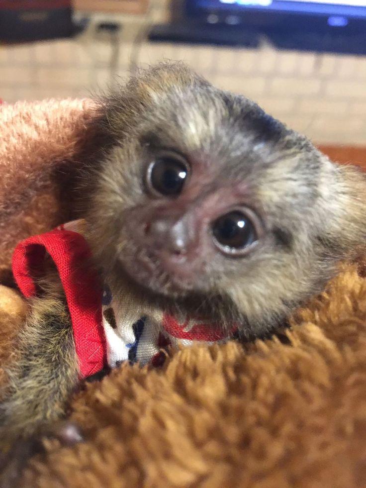 THE MONKEY WHISPERER Baby Monkeys, Baby Monkeys, Finger