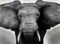 How to Draw an Elephant Head, African Elephant, Step by Step, safari animals, Animals, FREE Online Drawing Tutorial, Added by finalprodigy, March 13, 2012, 5:20:30 pm