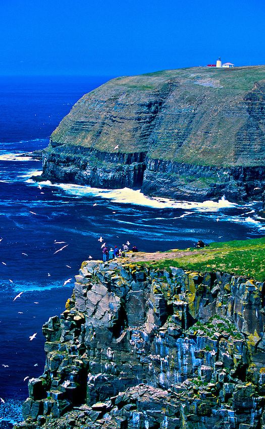Cape St. Mary's Ecological Reserve on Avalon Peninsula in Newfoundland, Canada