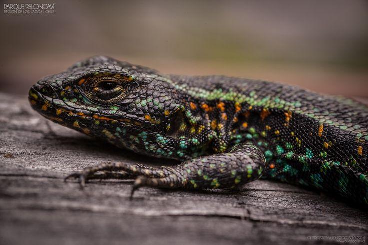 2014 Parque Reloncaví   Flickr - Photo Sharing!