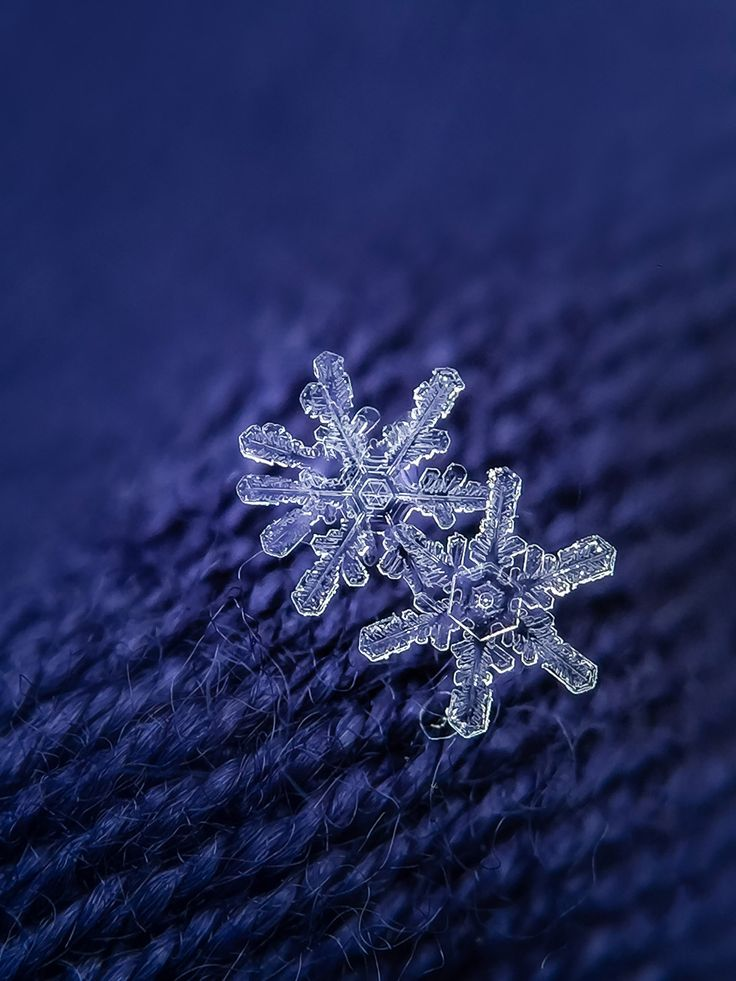 How to take macro pictures of snowflakes by Karen Schanely