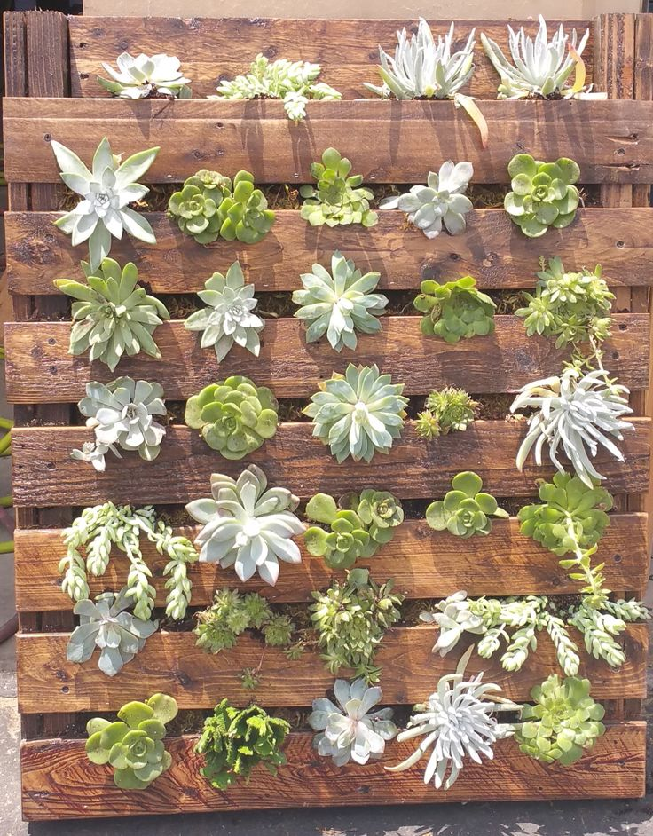 Can you say Vertical Garden? Good, now, how about repurposed pallets? Love this! Our very own Stunning Succulent Shadowbox!