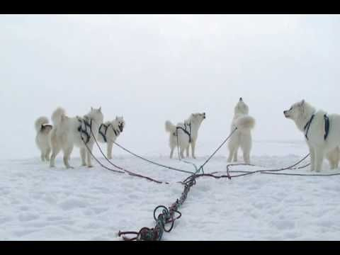 nunavut quest dog sled race