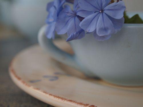что-то заимствованное и hellip;. Мэдж     Через Flickr:  немного веточку графит от нового завода постельных принадлежностей. Вуаля - что-то синее !!!