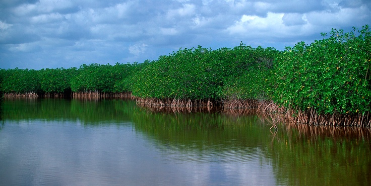 Dominican Republic mangroves
