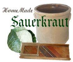 Home Made Sauerkraut. Late season cabbage makes better sauerkraut. #canning #sauerkraut #crock
