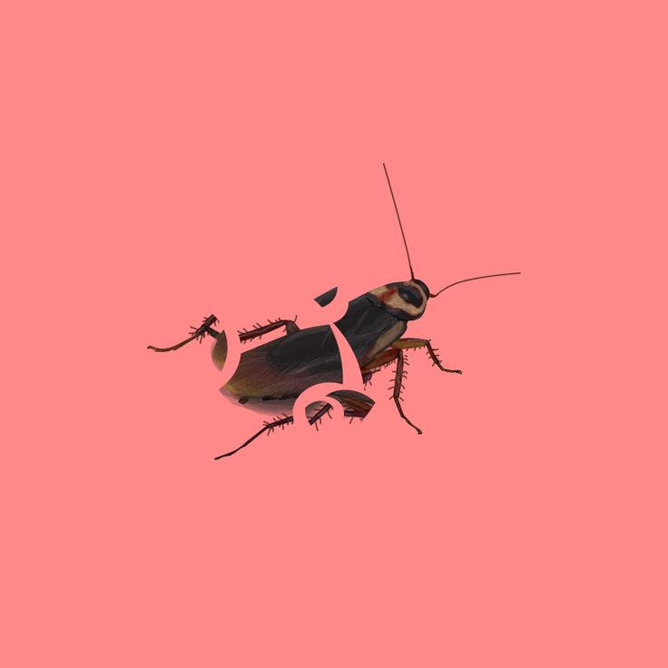 Illustration / cockroach / Glass / Fragile / Digital Art / Digital Painting / Minimalism / Illustration / Design / Concept / CD Cover / Album Cover