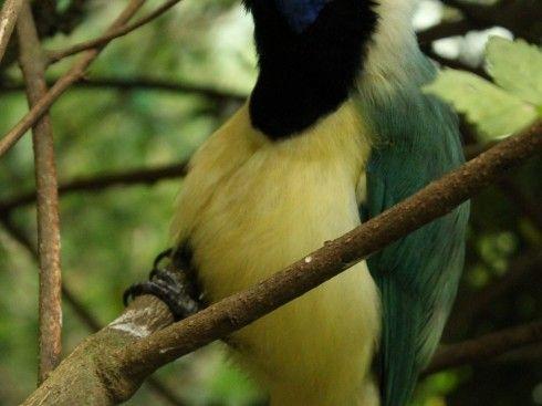 Entre los árboles el susurro de las aves...
