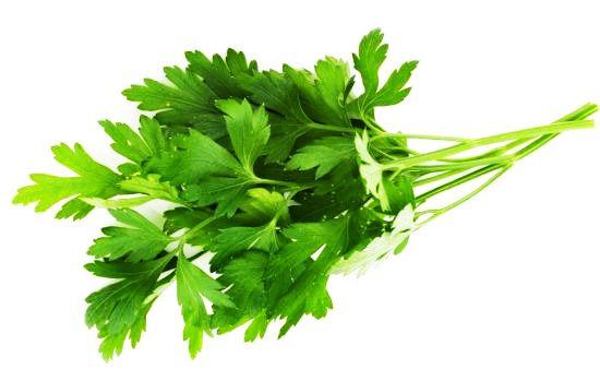 Ce modeste condiment est extraordinairement riche en éléments précieux.Il contient, pour 100 gr, 200 mg de vitamine C (Alors que le citron, réputé très riche, en renferme 100 mg), 60 mg de provitamine A (la carotte en contient de 2 à 14 mg), 240 mg de calcium, 19,2 mg de Fer. Il est connu et …
